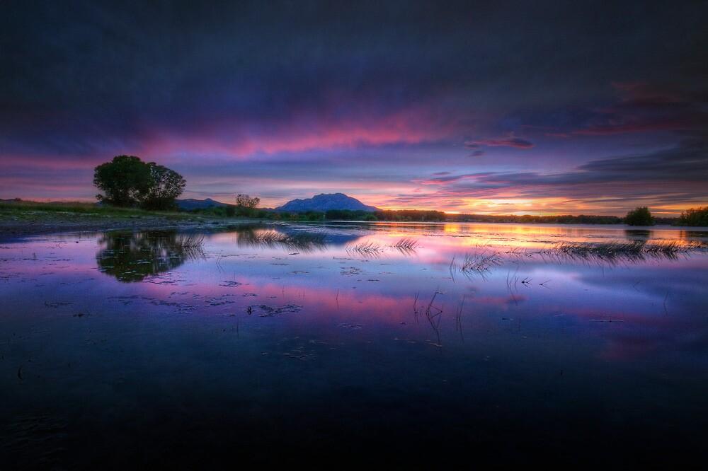 Purple Dream by Bob Larson