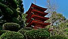 Japanese Tea Garden by Scott Johnson