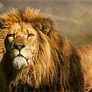 Lion on the alert by Brian Tarr