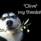 """Siberian Husky Danke """"Olive mein Dank"""" von Stephanie Laird"""