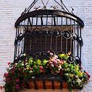 windowcage by Sue Frank