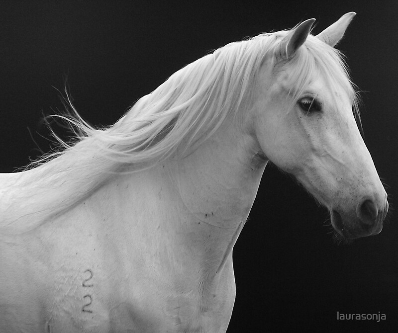 Quot Grey Andalusian Horse Quot By Laurasonja Redbubble