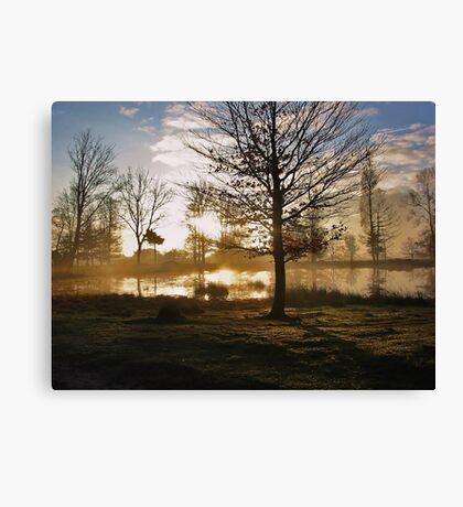 Sunrise and Tree Shadows Canvas Print