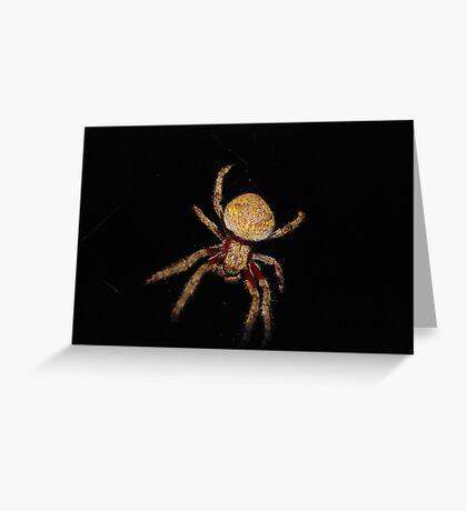 Garden Orb Weaver Greeting Card