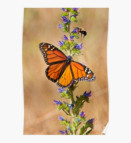 Monarch Butterfly - 33 Poster