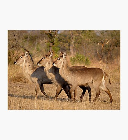 Girls, Look At That Guys Horns! Photographic Print