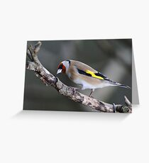 Goldfinch, The Rower, County Kilkenny, Ireland Greeting Card