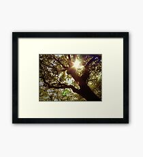 swimming in the sunlight, i will always fly back to you Framed Print