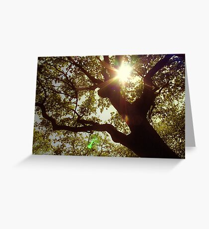 swimming in the sunlight, i will always fly back to you Greeting Card