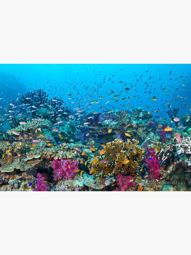 Fantasea Reef by maractwin
