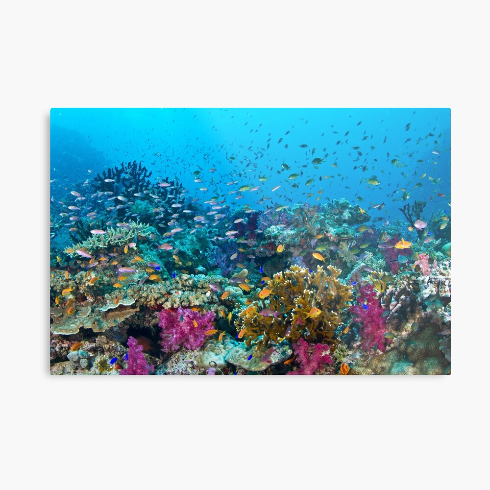 Fantasea Reef Metal Print