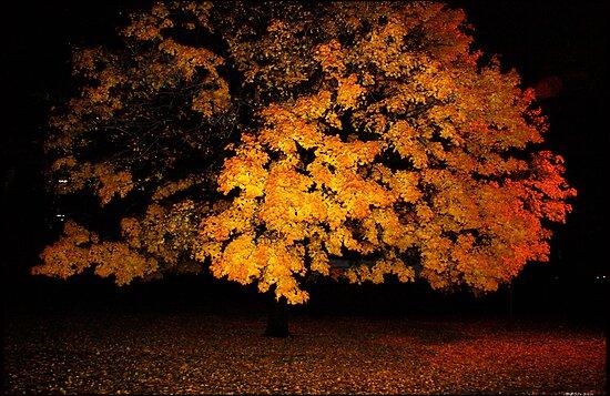 morning tree, 11-2010 by mark drago