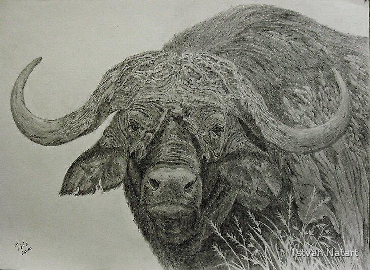 Cape Buffalo by Istvan Natart