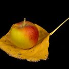 Apple on an Autumn leaf by Bo Insogna