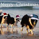 Merry Christmas by Varinia   - Globalphotos