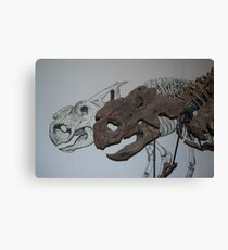 Protoceratops Fossil Skull and Sketch Canvas Print