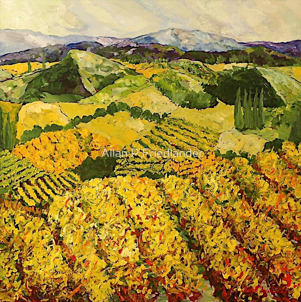Sun Harvest by Allan P Friedlander