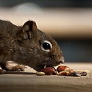 Squirrel Choosing a Nut by ArianaMurphy