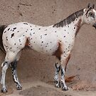 Leopard appy model horse by arcadian7