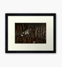 Moss and Ice Framed Print