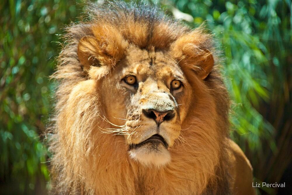 King by Liz Percival