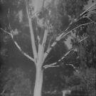 tree and fence, near Grampians by Soxy Fleming