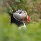 Puffin Portrait by ApeArt