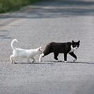 Cat and her white kitten cross the road by Philippe Widling