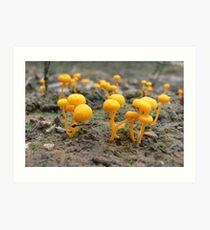 Steiglitz Yellow Dance Art Print