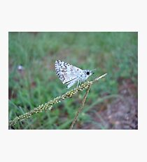 Spring Azure butterfly with an ant Photographic Print