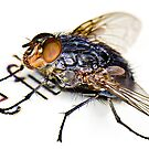 The Fly by Gareth Jones
