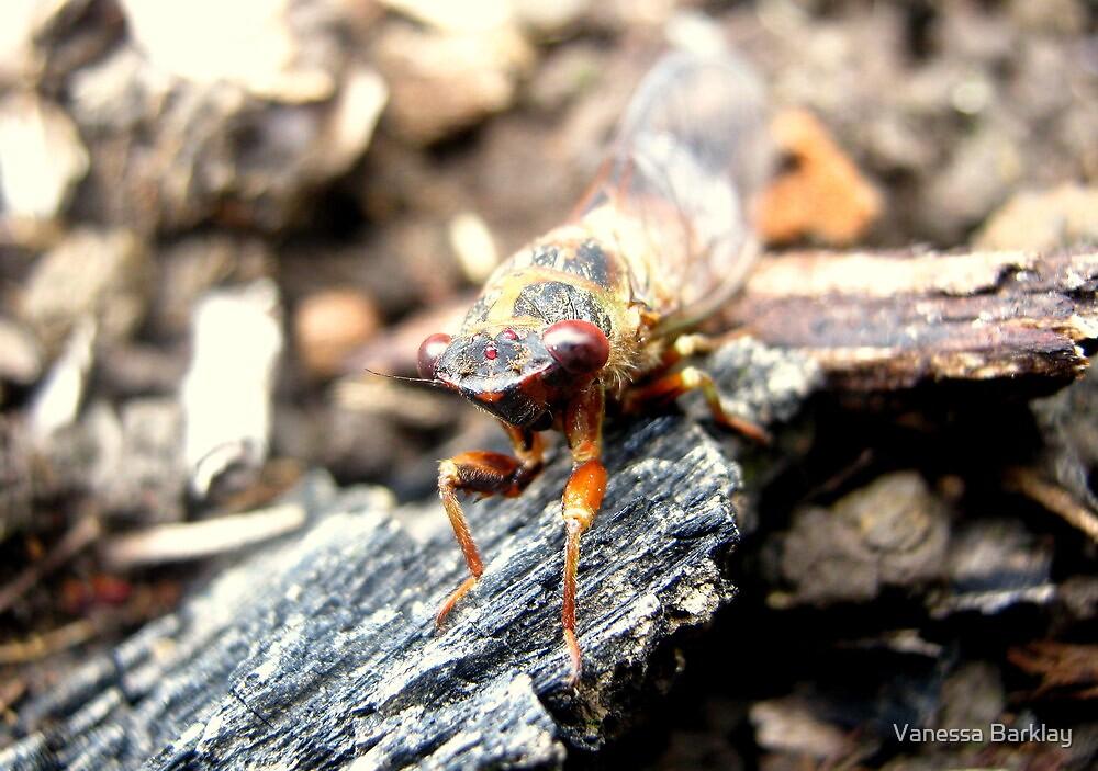 Little Strolling Cicada by Vanessa Barklay