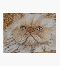 kitty kaboodle Photographic Print