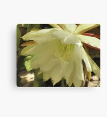 Pastel Flower -Close Up Canvas Print