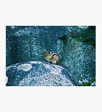 Curious Chipmunk Photographic Print