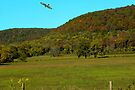 Cruz'en The Ozark Mountains by NatureGreeting Cards ©ccwri
