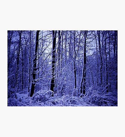 Winter Woods  Photographic Print