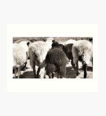 The Flock Art Print
