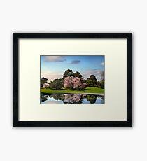 Cherry Tree Reflections Framed Print
