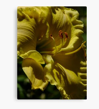 Lemon Sherbert Day Lily! Canvas Print