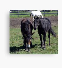 Horse and Mule Canvas Print