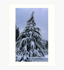 Snow Laden Art Print