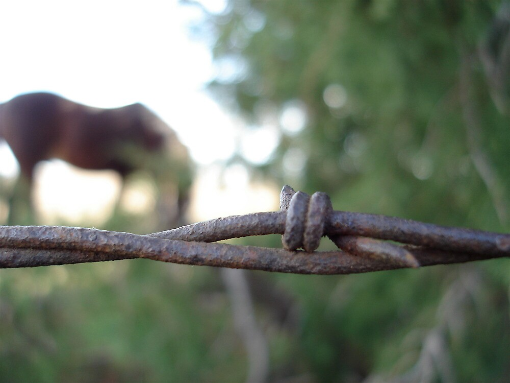 Barbed Wire With Horse Background by superhorse