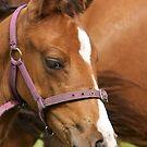 Young Foal by Buckwhite