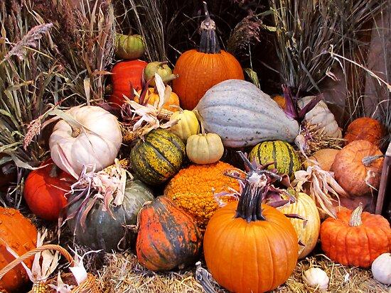 Thankful Harvest by shutterbug2010