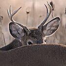 peak a boo buck by Rodney55