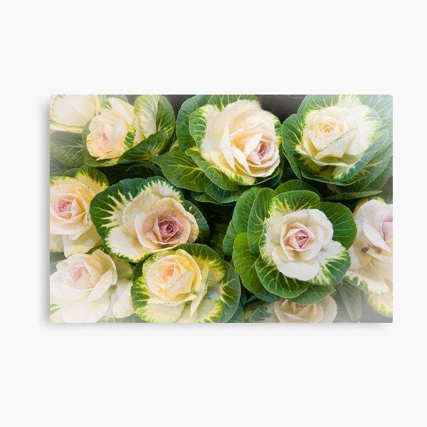 Flowering Kale Bouquet Canvas Print