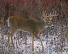Thistle buck by Rodney55