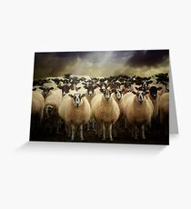 Sheepfest Greeting Card