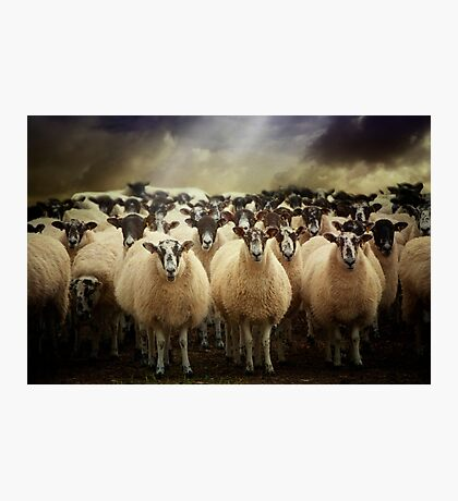 Sheepfest Photographic Print